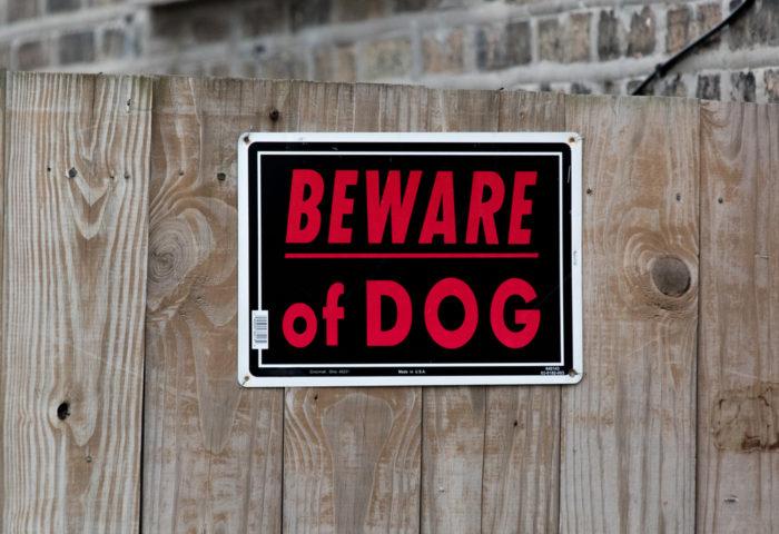 New Jersey dog bite lawyer