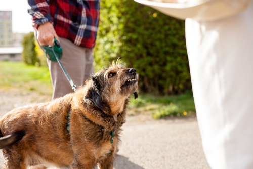 What To Do If Your Dog Bites Someone